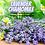 Thumbnail: Lavender Chamomile