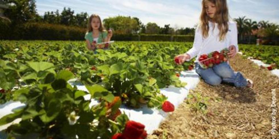 Knaus Berry Farm Field trip
