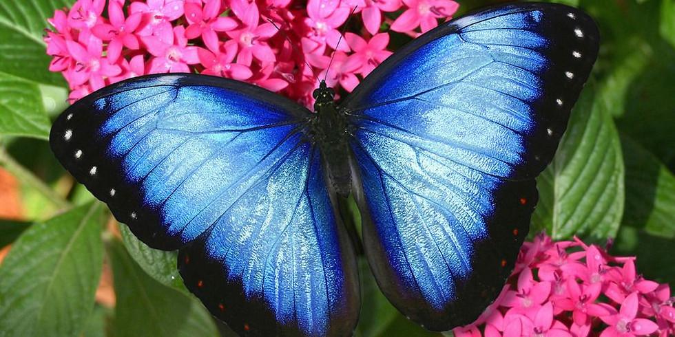 Butterfly World Field Trip