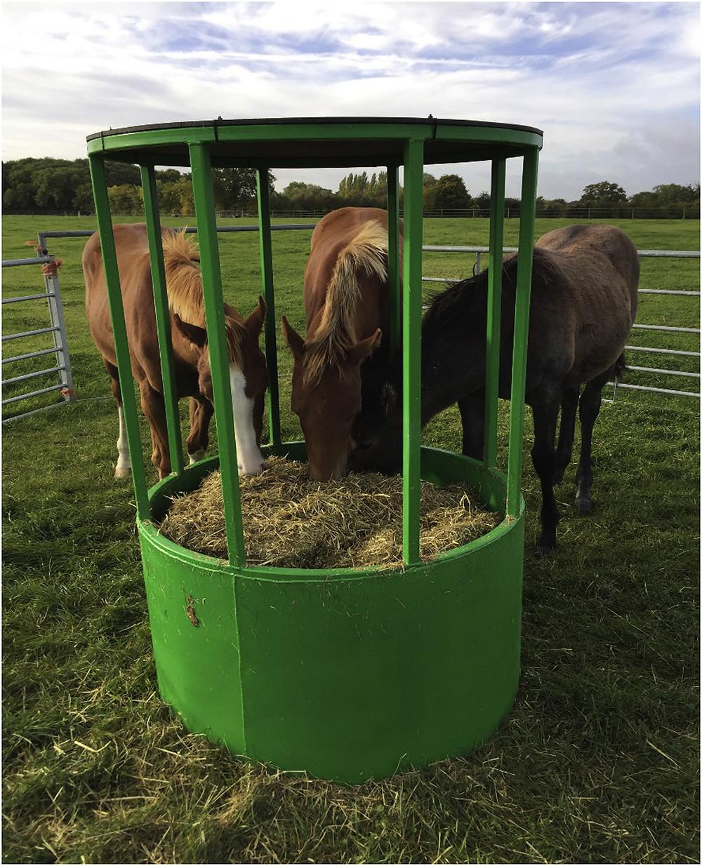 foals grazing at feeder