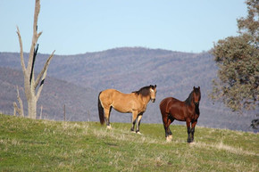 Ten easy steps to good equine health