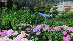 Shade Perennials