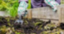 Fall-Gardening-Remove-Dead-Plants.jpg