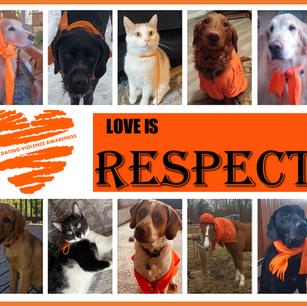 Pet Respect.png