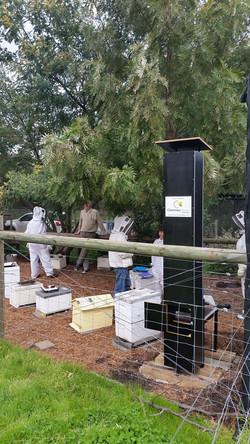 Chimney Hive
