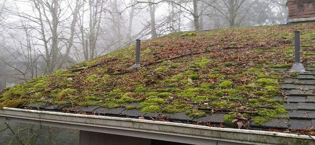 Moss on roof.jpeg