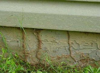 If you see any mud tubes on the outside of your home like this, you have a termite infestation.