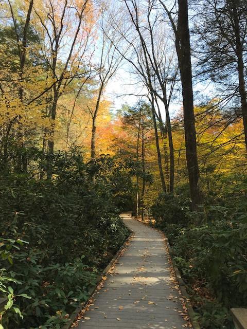 Dingman Falls Trail