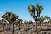 2/22/19 to 2/26/19 Joshua Tree Lake RV CG; Joshua Tree CA.