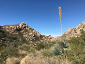 11/2518 to 12/2/18 Catalina State Park, Tuscon AZ