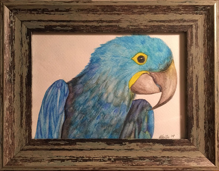 Brazil Parrot