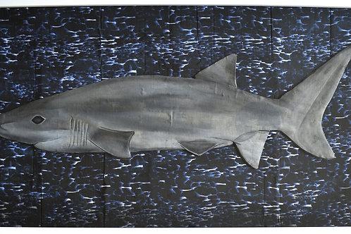 Six-Gill Shark
