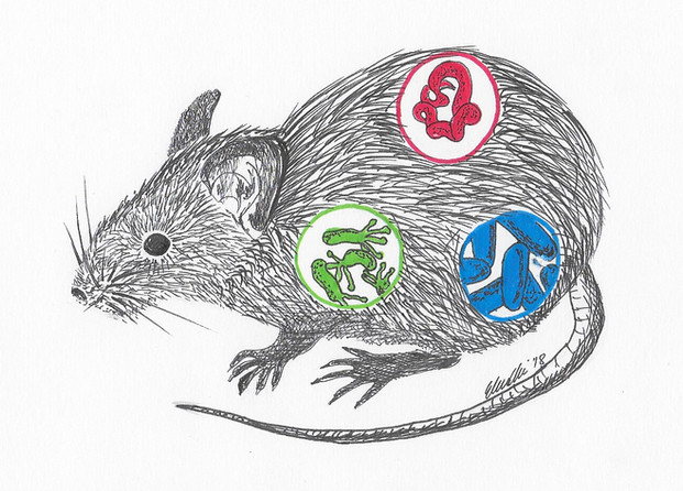 Episode 57: Of mice and microbes - IBAHCM Naturally Speaking