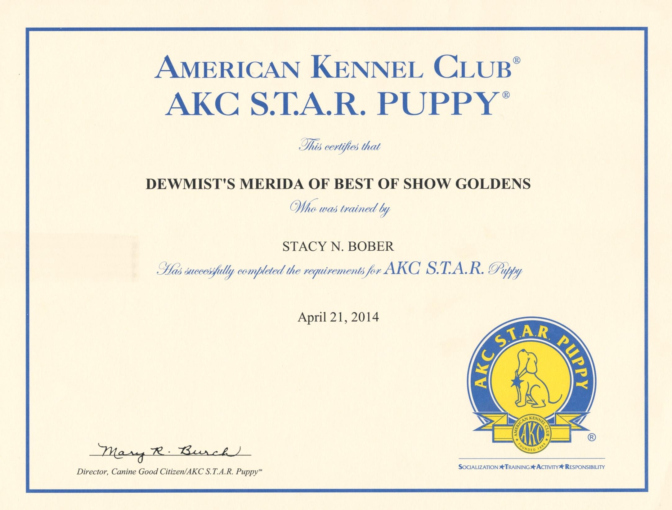 Merida star puppy