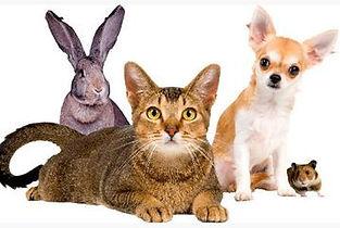 kat-hond-konijn-hamster