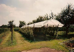 Overkappingen voor fruitstruiken en fruitbomen