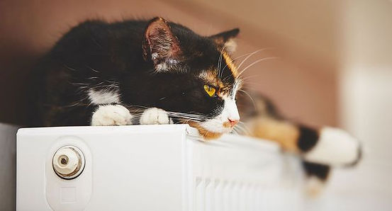 verwarming_kat