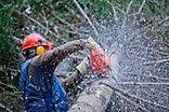 travaux forestiers
