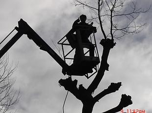 Ageco Snoeien en vellen van bomen_02