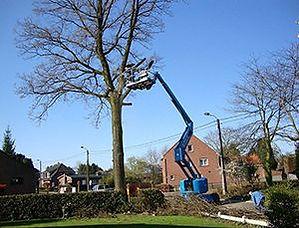 Bomen Patrick Geerts