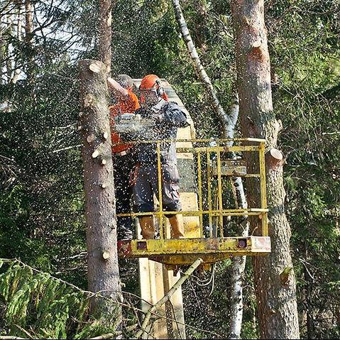 Abattage d'arbres à Liège et Namur