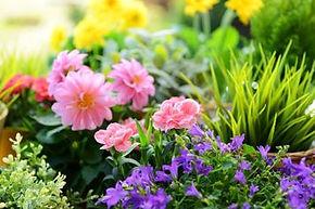 aveve-bloemen