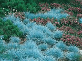 aanleg vaste planten