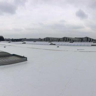 6000m² witte TPO met nieuwe polycarbonaat lichtstraten
