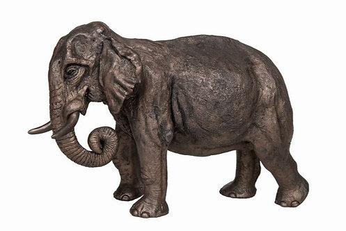 Raja - Indian Elephant