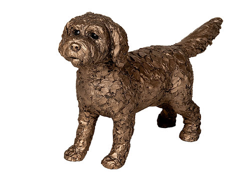 Sparky - Cockapoo Standing