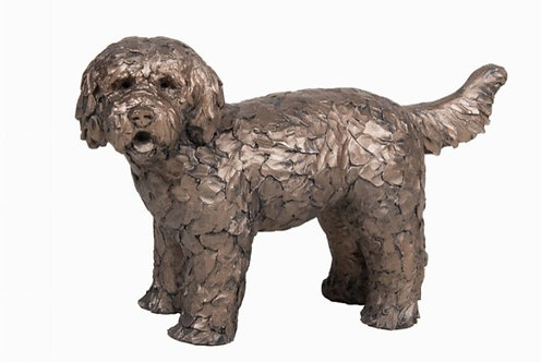 Button Labradoodle standing
