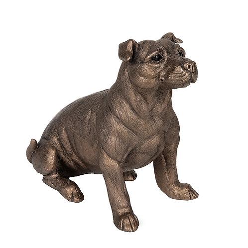 Bruce Staffordshire Bull Terrier