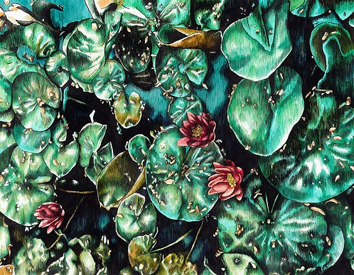 Adele van Heerden - Connor's Waterlillies, flowers, drawing