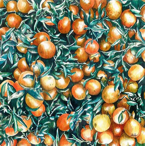 Adele van Heerden - Orangerie