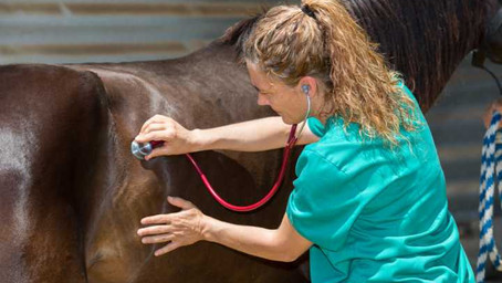 Pferde-OP-Versicherung - Oft unterschätzte Tierklinikkosten