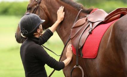 Berufsunfähigkeitsversicherung für Pferdewirte
