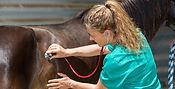 Pferde-OP-Schutz.jpg