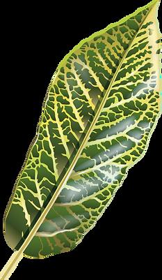 Pflanze_11_web.png
