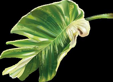 Pflanze_1_web.png