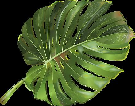 Pflanze_8_web.png