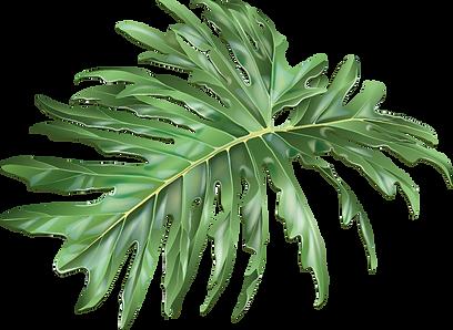 Pflanze_12_web.png