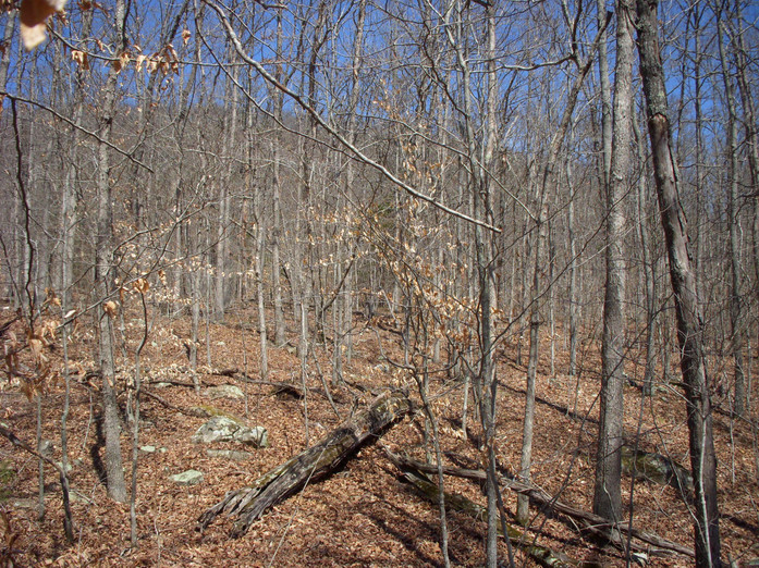 Running Creek 557AC (44).jpg