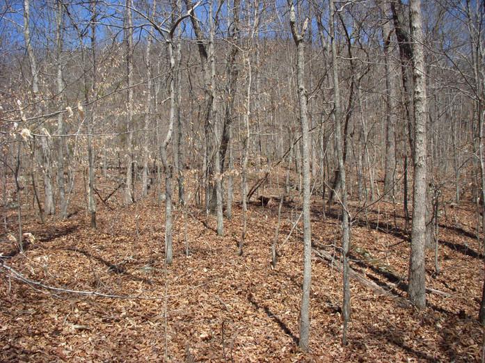Running Creek 557AC (43).jpg