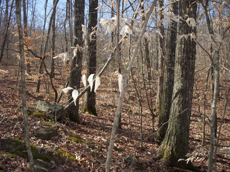 Running Creek 557AC (29).jpg