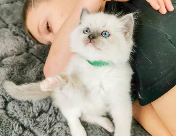 enfant chaton mignon