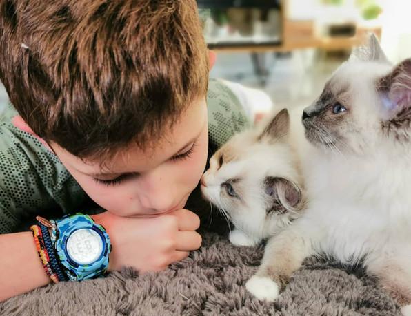 enfant et chatons