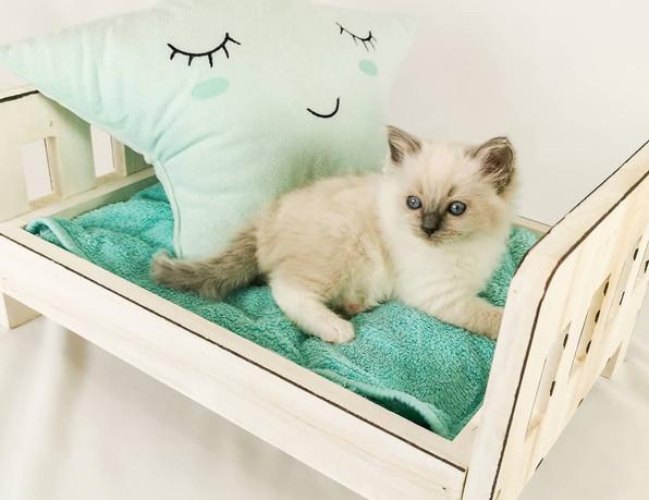 chaton et lit poupée