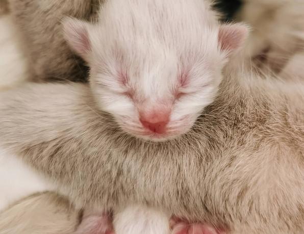 chaton nouveau né