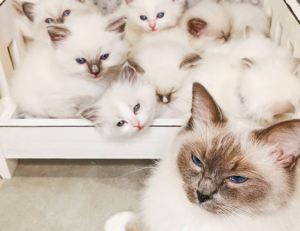 maman chat et chatons