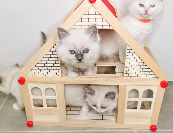 maisonnette chatons